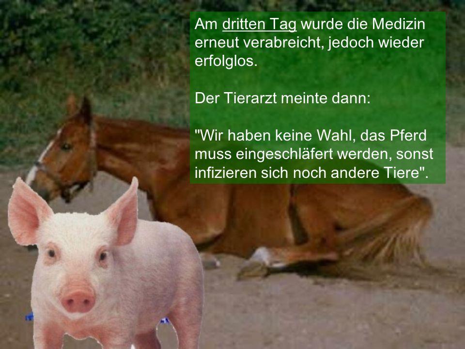 Die Sau hat alles gehört, rannte zum Pferd und schrie: Komm doch, steh auf, der Tierarzt ist da, jetzt oder nie!!.