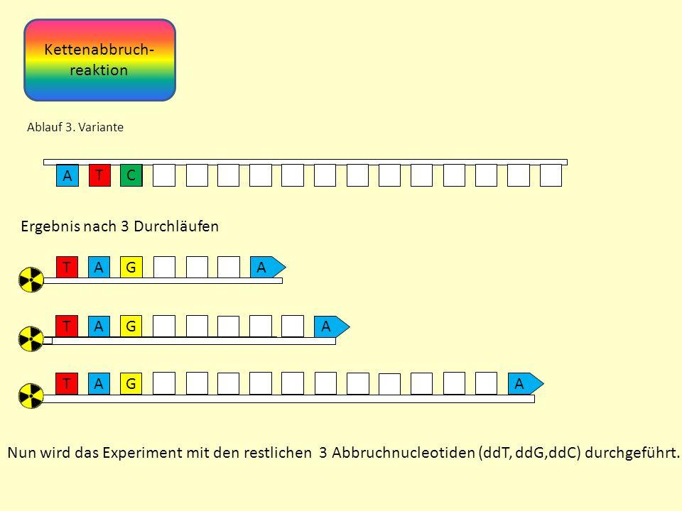Kettenabbruch- reaktion Ablauf 3.