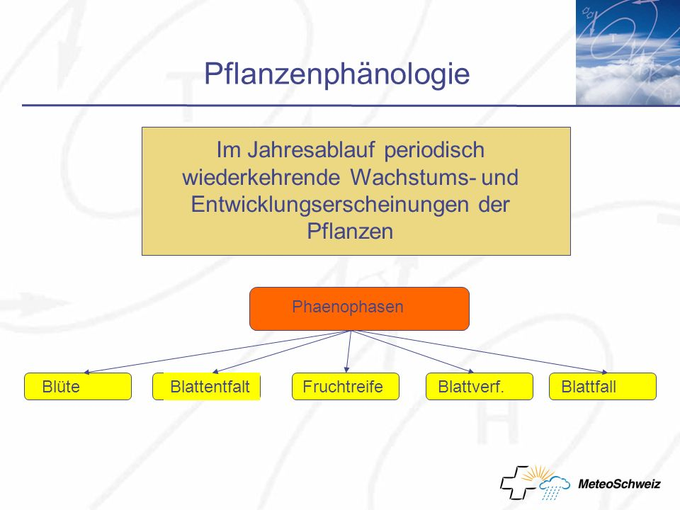 Pflanzenphänologie Im Jahresablauf periodisch wiederkehrende Wachstums- und Entwicklungserscheinungen der Pflanzen Phaenophasen Fruchtreife BlüteBlattentfaltBlattverf.Blattfall
