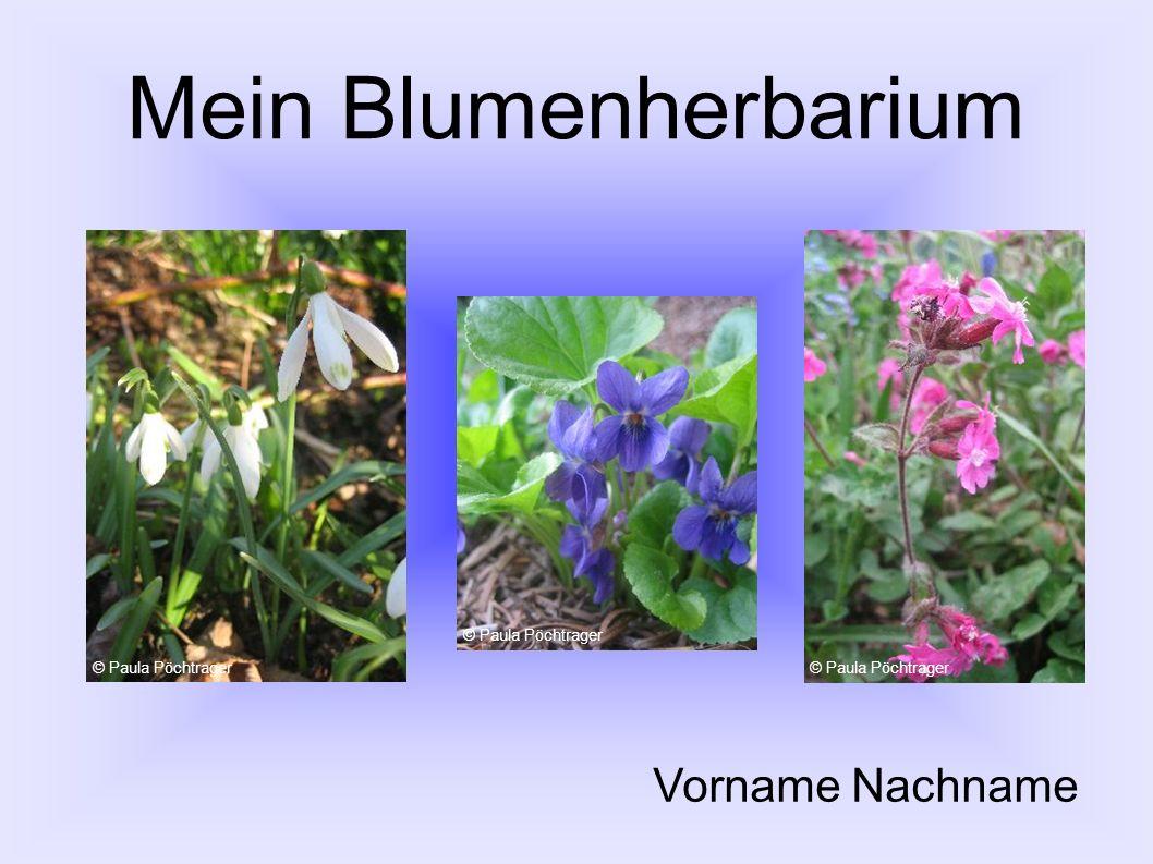 Mein Blumenherbarium Vorname Nachname © Paula Pöchtrager