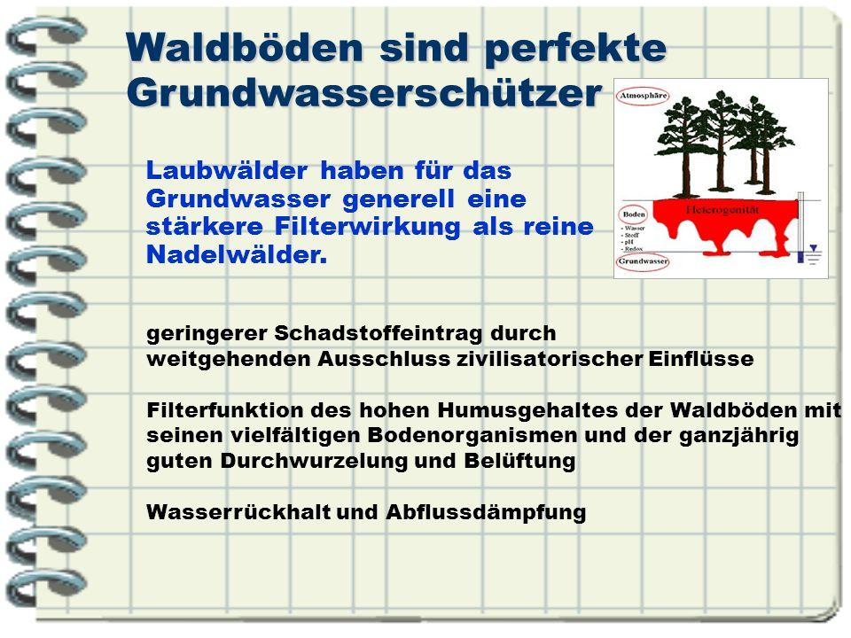 Waldböden sind perfekte Grundwasserschützer geringerer Schadstoffeintrag durch weitgehenden Ausschluss zivilisatorischer Einflüsse Filterfunktion des