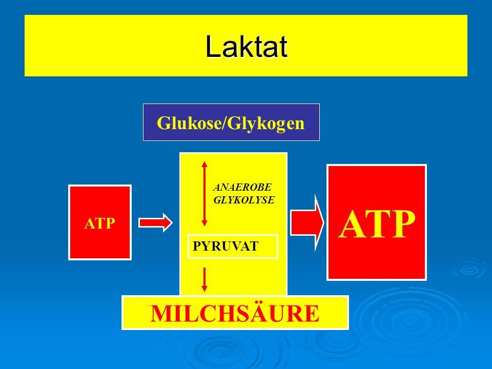Glukose/Glykogen ANAEROBE GLYKOLYSE PYRUVAT ATP MILCHSÄURE Laktat