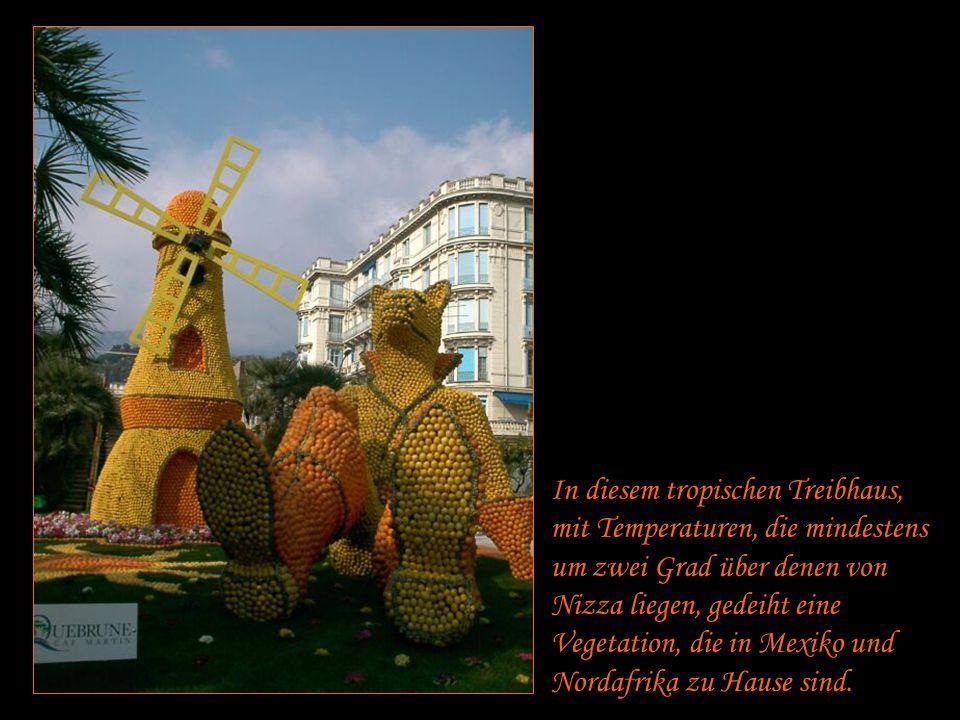 Die Sevilla-Orangen und süße genuesische Mandarinen mischen sich unter Menton - Zitronen, die das Wahrzeichen der Stadt sind.