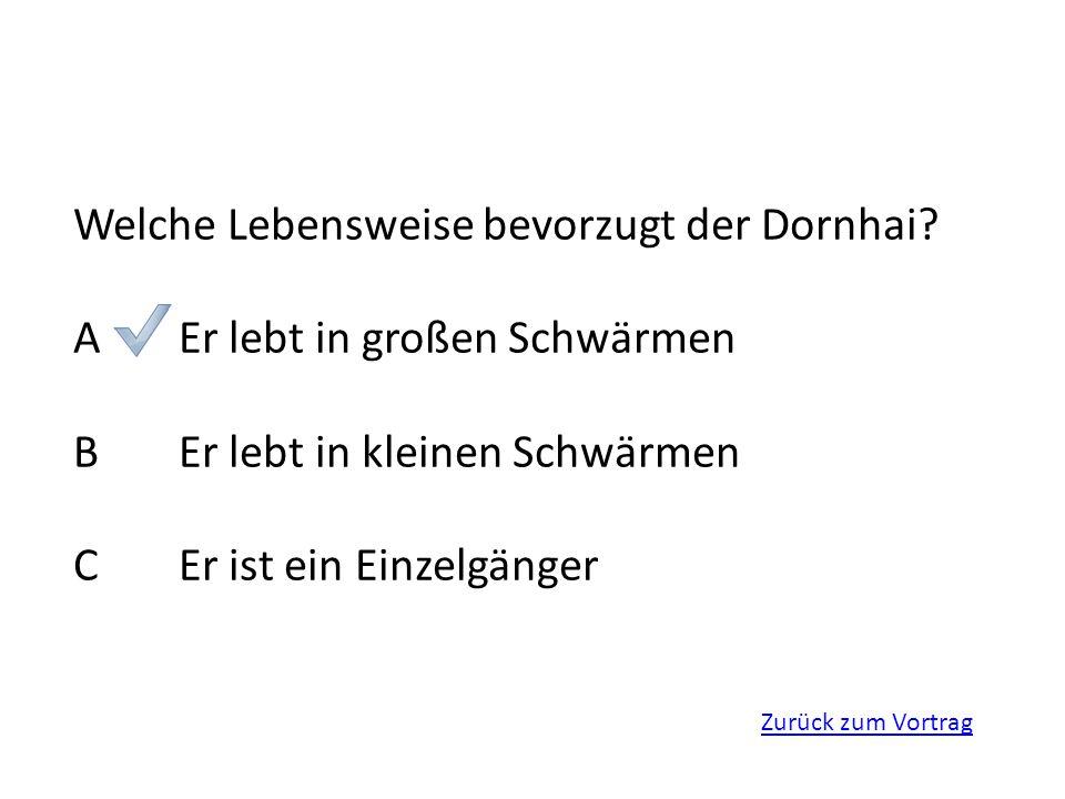 Zurück zum Vortrag Welche Lebensweise bevorzugt der Dornhai? AEr lebt in großen Schwärmen BEr lebt in kleinen Schwärmen CEr ist ein Einzelgänger
