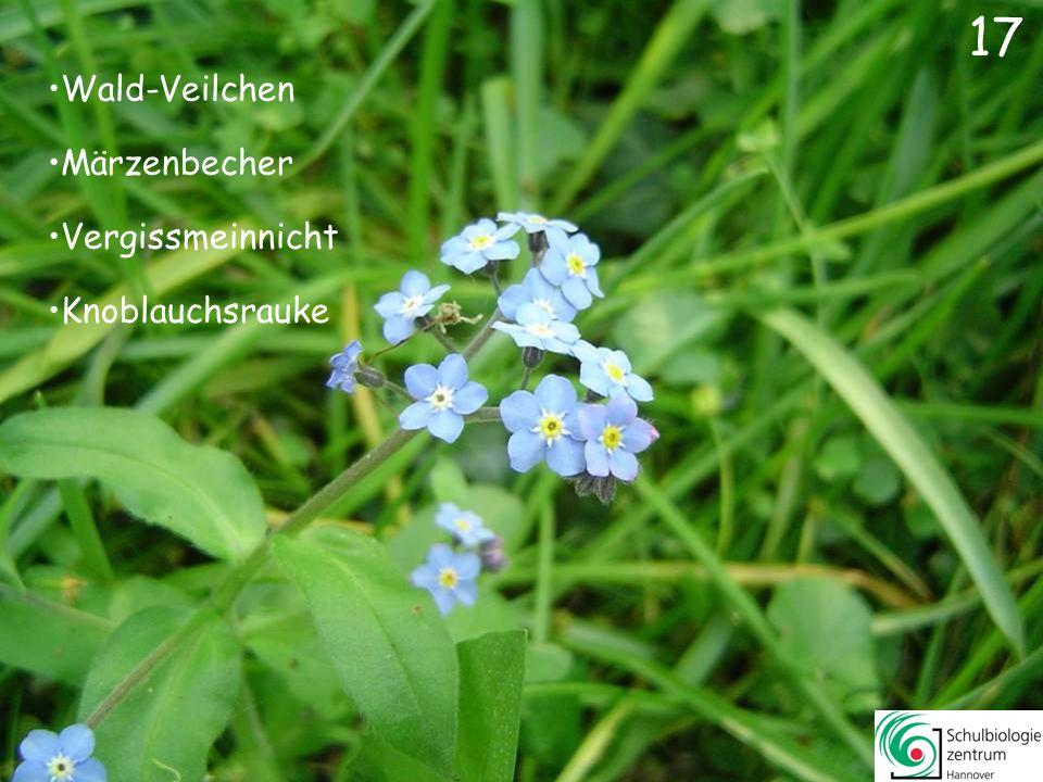 16 Wald-Veilchen Lerchensporn Gänseblümchen Krokus 16