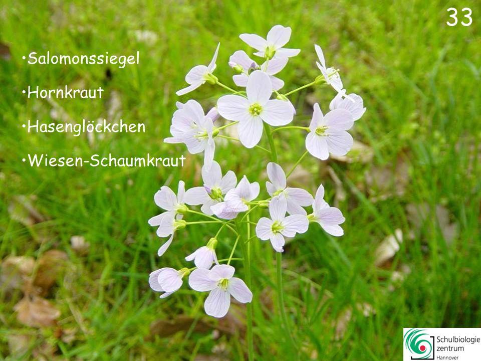 32 Löwenzahn Gänseblümchen Sternmiere Huflattich 32