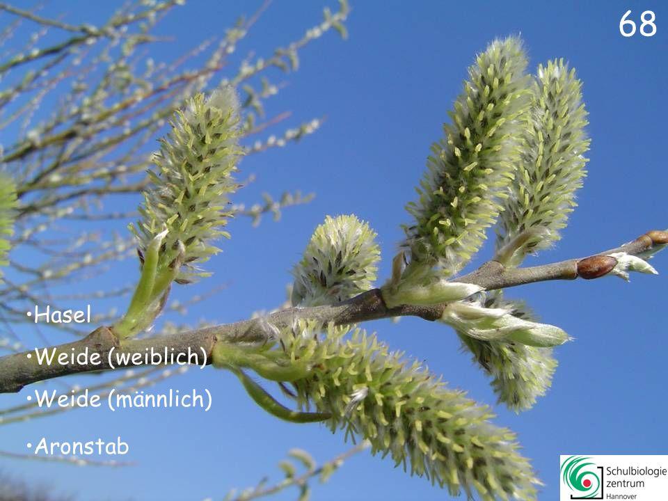 67 Erle Weide (männlich) Hasel Hahnenfuß 67