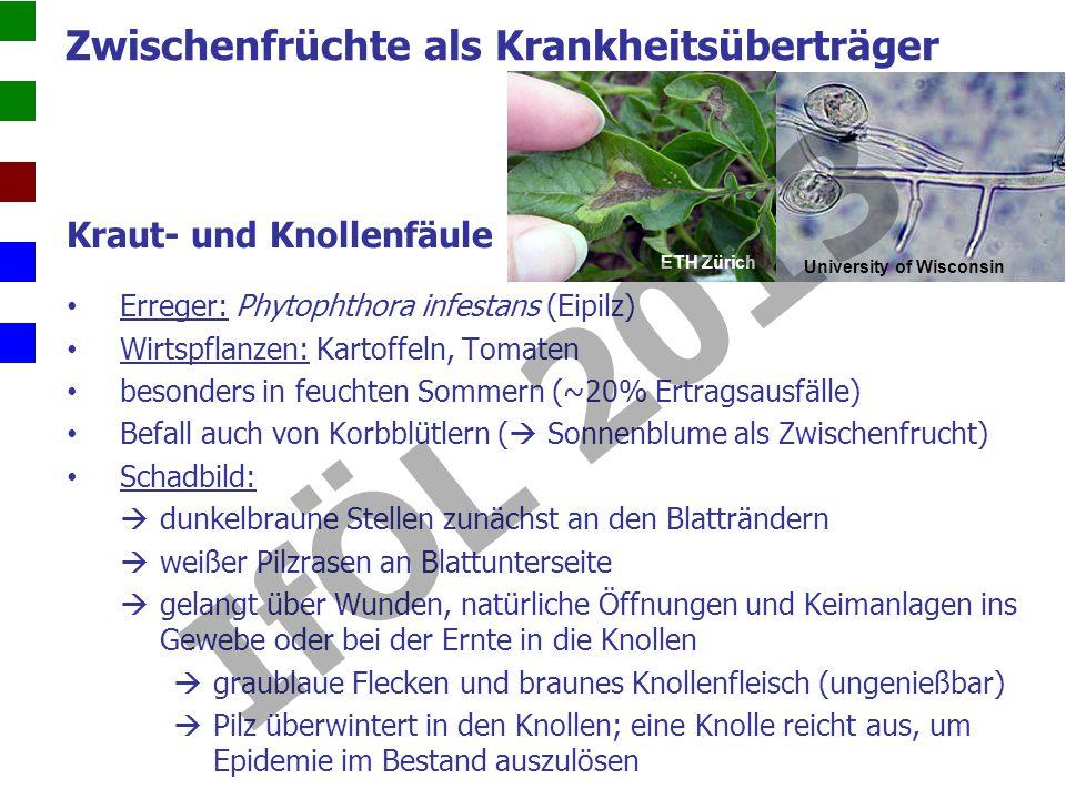 Kraut- und Knollenfäule Erreger: Phytophthora infestans (Eipilz) Wirtspflanzen: Kartoffeln, Tomaten besonders in feuchten Sommern (~20% Ertragsausfälle) Befall auch von Korbblütlern ( Sonnenblume als Zwischenfrucht) Schadbild: dunkelbraune Stellen zunächst an den Blatträndern weißer Pilzrasen an Blattunterseite gelangt über Wunden, natürliche Öffnungen und Keimanlagen ins Gewebe oder bei der Ernte in die Knollen graublaue Flecken und braunes Knollenfleisch (ungenießbar) Pilz überwintert in den Knollen; eine Knolle reicht aus, um Epidemie im Bestand auszulösen University of Wisconsin ETH Zürich Zwischenfrüchte als Krankheitsüberträger IfÖL 2013