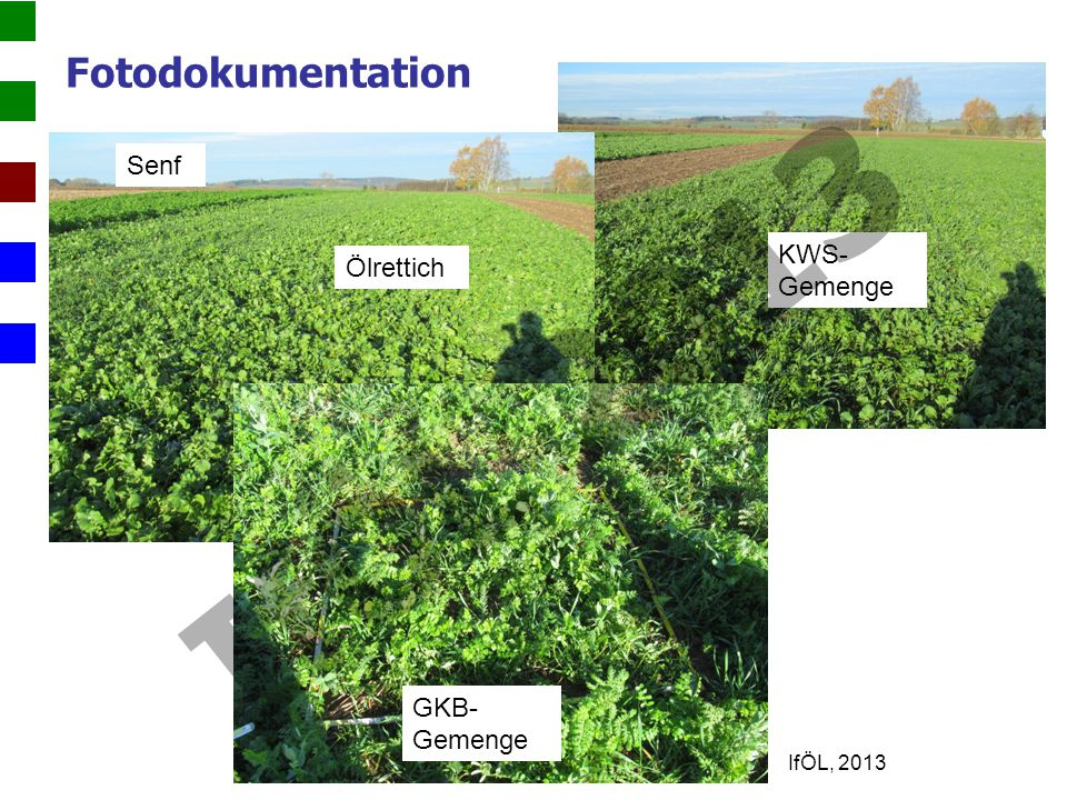Fotodokumentation KWS- Gemenge Ölrettich Senf GKB- Gemenge IfÖL 2013 IfÖL, 2013