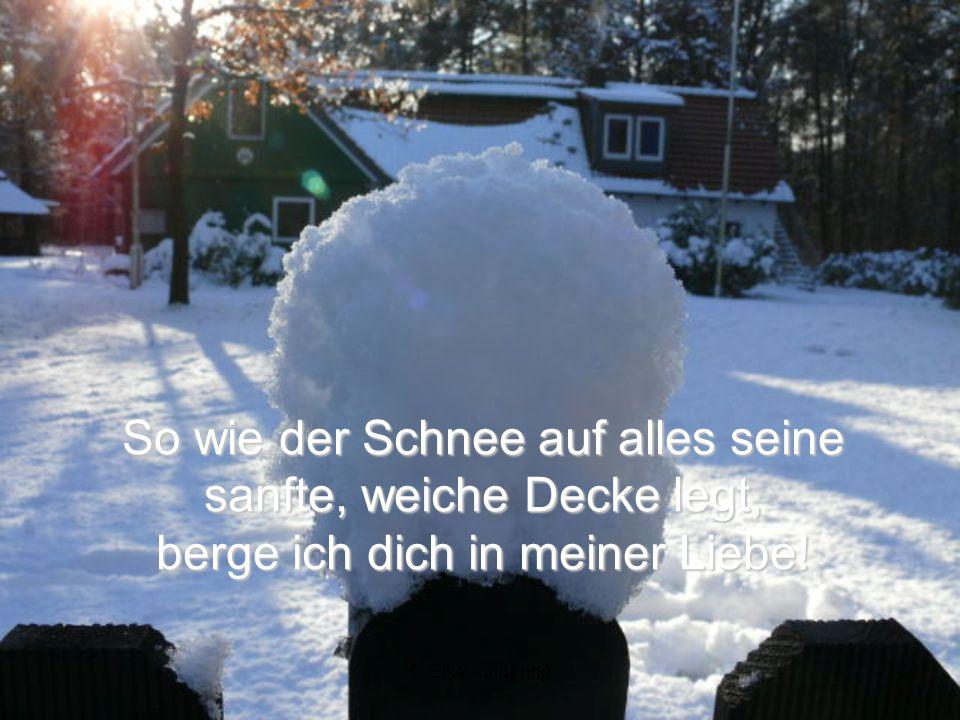 Meine Meine Liebe vergibt und deckt deine Sünden zu, sie macht dich weißer als Schnee!