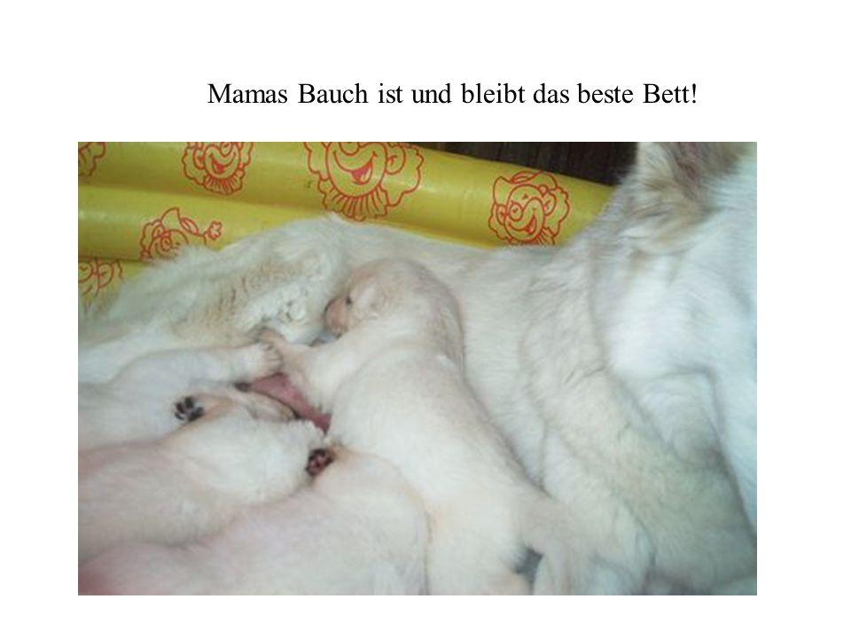 Mamas Bauch ist und bleibt das beste Bett!
