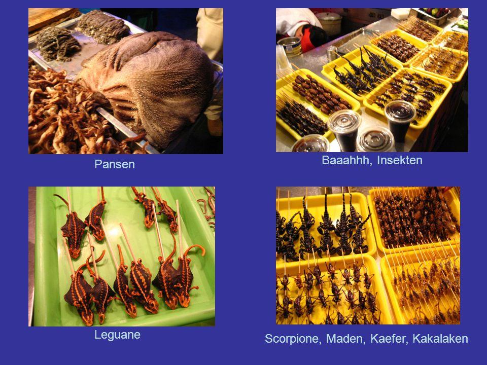 Pansen Baaahhh, Insekten Leguane Scorpione, Maden, Kaefer, Kakalaken
