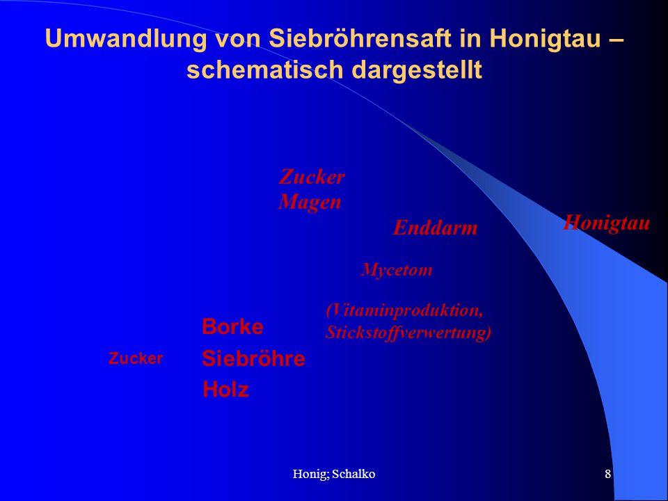 Honig; Schalko8 Umwandlung von Siebröhrensaft in Honigtau – schematisch dargestellt Zucker Magen Enddarm Honigtau Mycetom (Vitaminproduktion, Sticksto