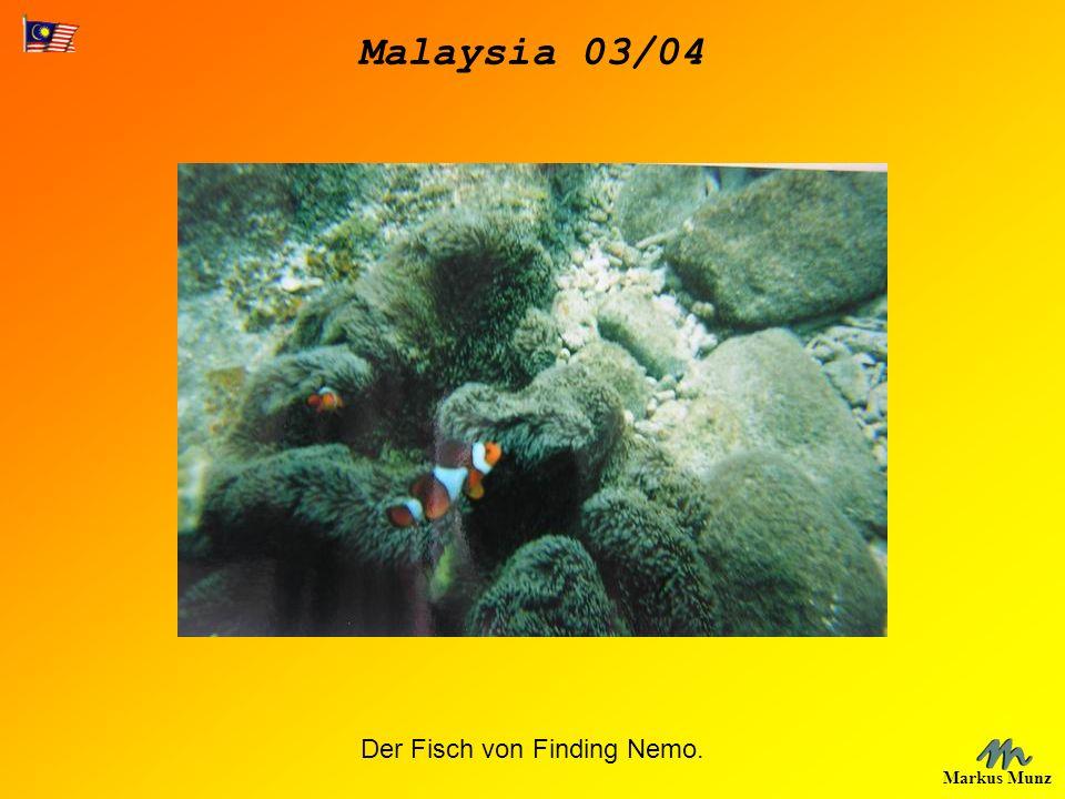 Malaysia 03/04 Markus Munz Der Fisch von Finding Nemo.