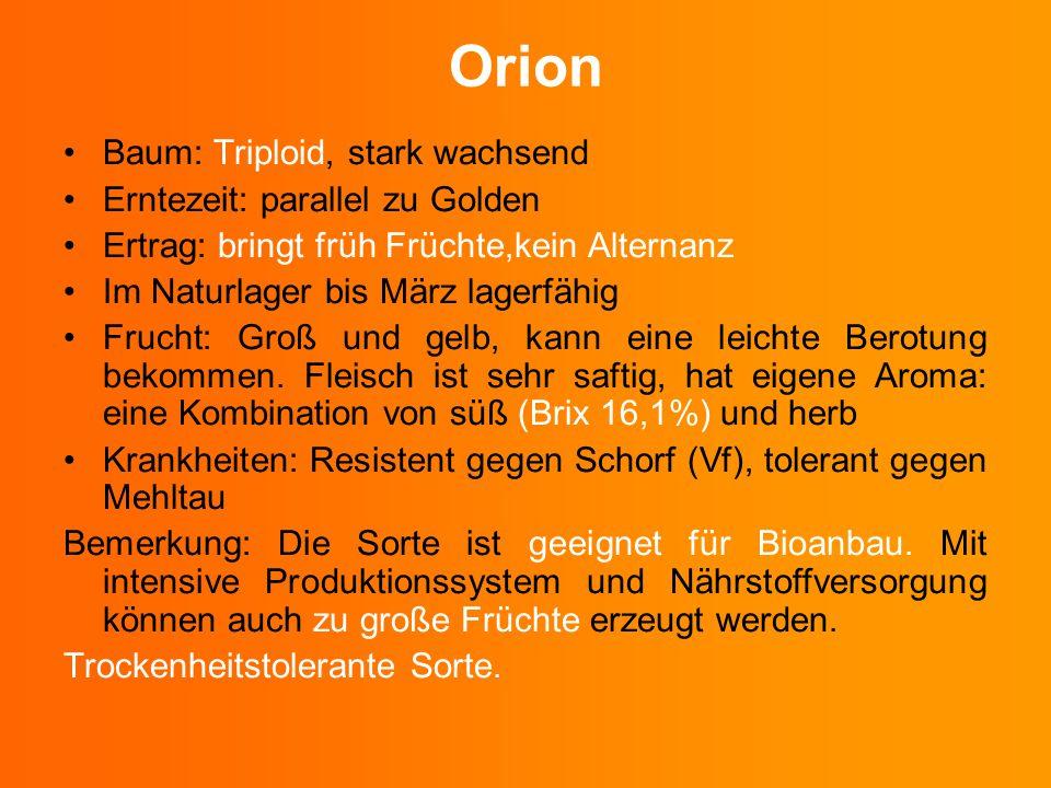 Orion Baum: Triploid, stark wachsend Erntezeit: parallel zu Golden Ertrag: bringt früh Früchte,kein Alternanz Im Naturlager bis März lagerfähig Frucht