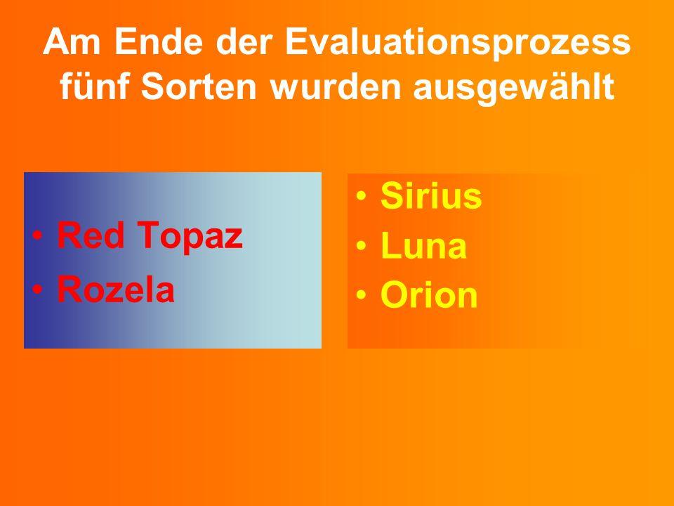 Am Ende der Evaluationsprozess fünf Sorten wurden ausgewählt Red Topaz Rozela Sirius Luna Orion