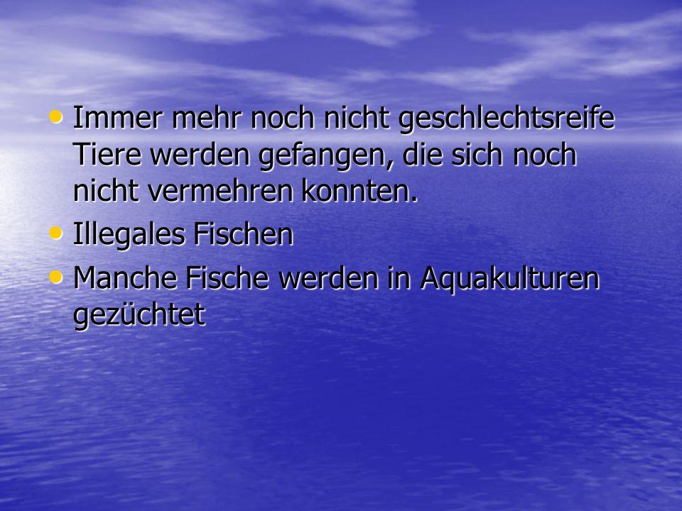 Aquakulturen Aquakulturen …befasst sich mit der Aufzucht von im Wasser lebenden Organismen.