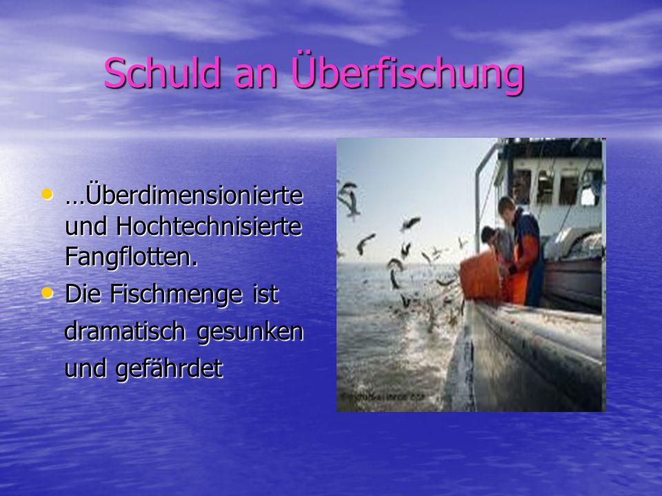Schuld an Überfischung Schuld an Überfischung …Überdimensionierte und Hochtechnisierte Fangflotten. …Überdimensionierte und Hochtechnisierte Fangflott