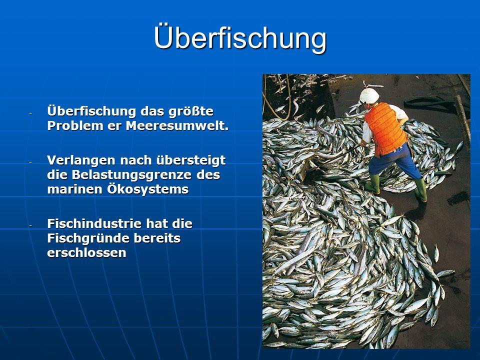 Überfischung - Überfischung das größte Problem er Meeresumwelt. - Verlangen nach übersteigt die Belastungsgrenze des marinen Ökosystems - Fischindustr
