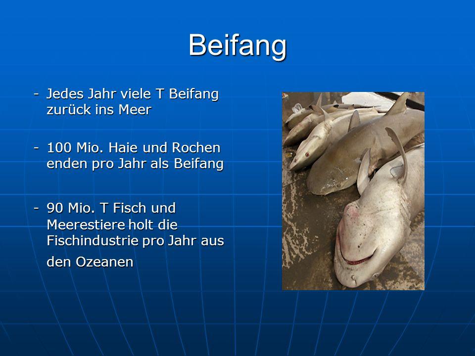 Beifang - Jedes Jahr viele T Beifang zurück ins Meer - Jedes Jahr viele T Beifang zurück ins Meer -100 Mio.