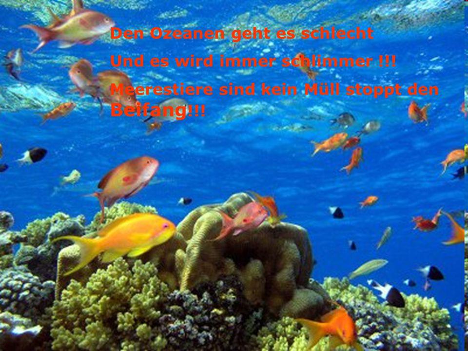 Den Ozeanen geht es schlecht Und es wird immer schlimmer !!! Meerestiere sind kein Müll stoppt den Beifang !!!