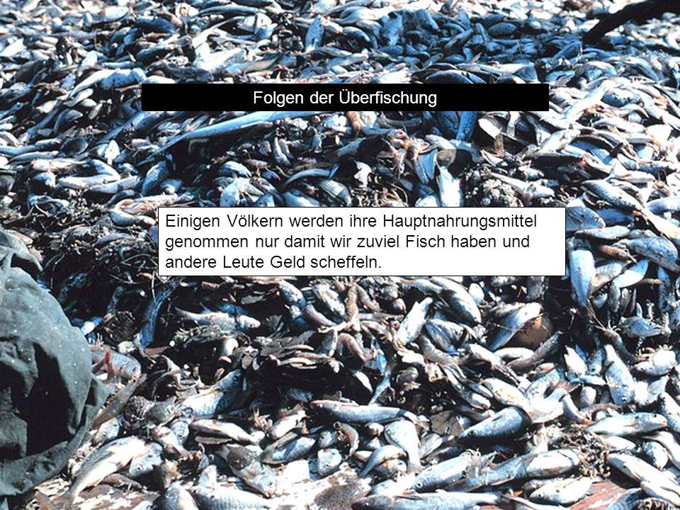 Folgen der Überfischung Einigen Völkern werden ihre Hauptnahrungsmittel genommen nur damit wir zuviel Fisch haben und andere Leute Geld scheffeln.