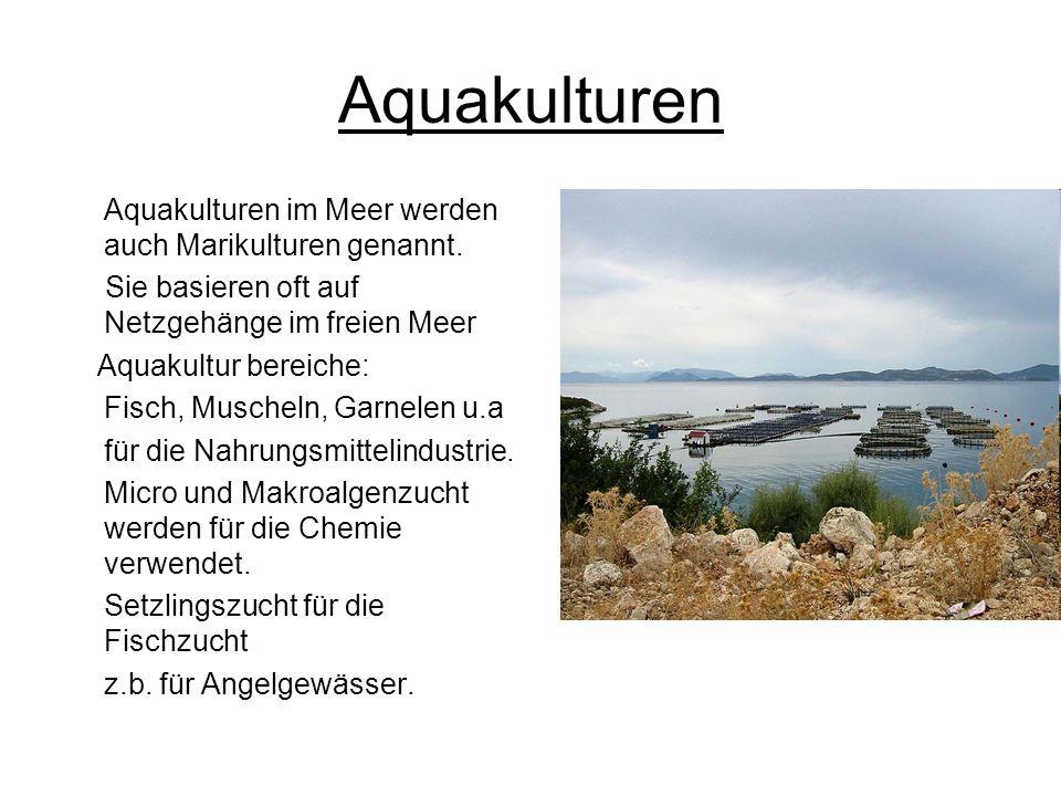 Aquakulturen Aquakulturen im Meer werden auch Marikulturen genannt. Sie basieren oft auf Netzgehänge im freien Meer Aquakultur bereiche: Fisch, Musche
