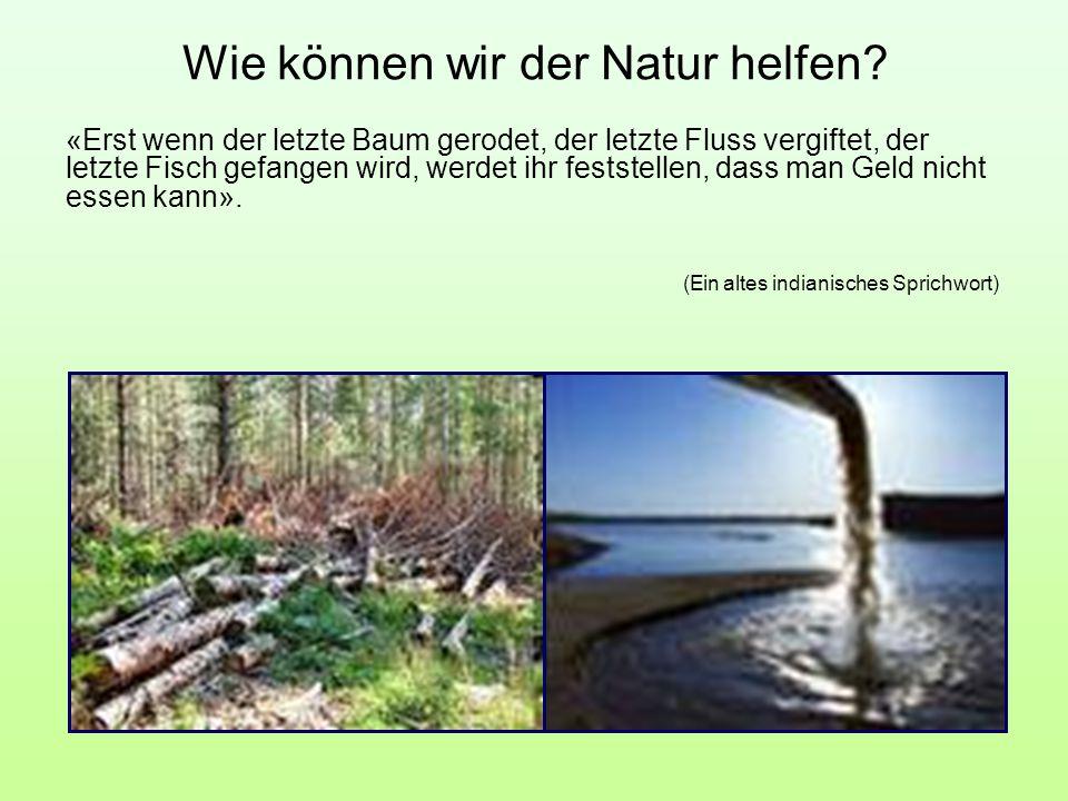 «Erst wenn der letzte Baum gerodet, der letzte Fluss vergiftet, der letzte Fisch gefangen wird, werdet ihr feststellen, dass man Geld nicht essen kann