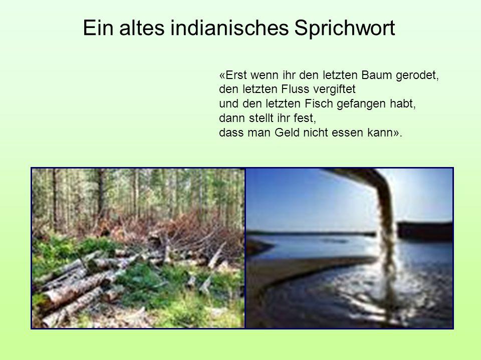 Ein altes indianisches Sprichwort «Erst wenn ihr den letzten Baum gerodet, den letzten Fluss vergiftet und den letzten Fisch gefangen habt, dann stell