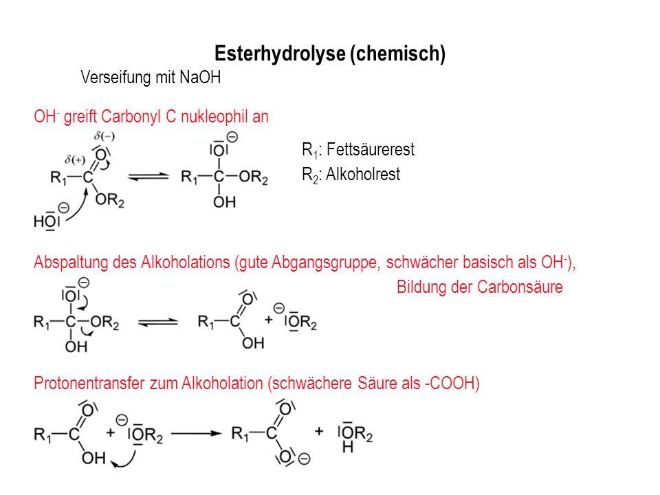 Esterhydrolyse (chemisch) R 1 : Fettsäurerest R 2 : Alkoholrest Verseifung mit NaOH OH - greift Carbonyl C nukleophil an Abspaltung des Alkoholations