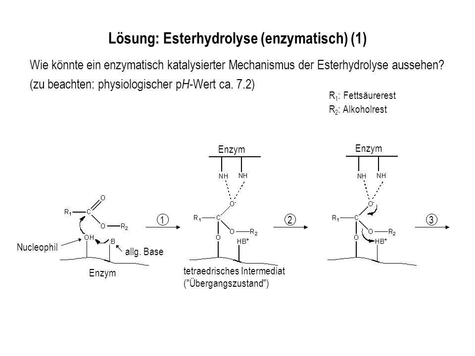 R 1 : Fettsäurerest R 2 : Alkoholrest Wie könnte ein enzymatisch katalysierter Mechanismus der Esterhydrolyse aussehen? (zu beachten: physiologischer