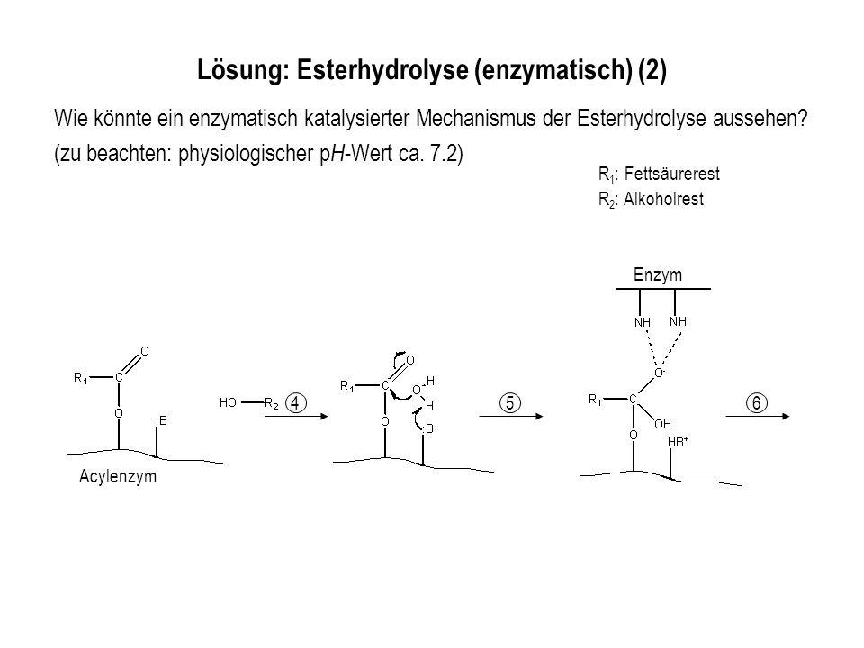 R 1 : Fettsäurerest R 2 : Alkoholrest Wie könnte ein enzymatisch katalysierter Mechanismus der Esterhydrolyse aussehen.