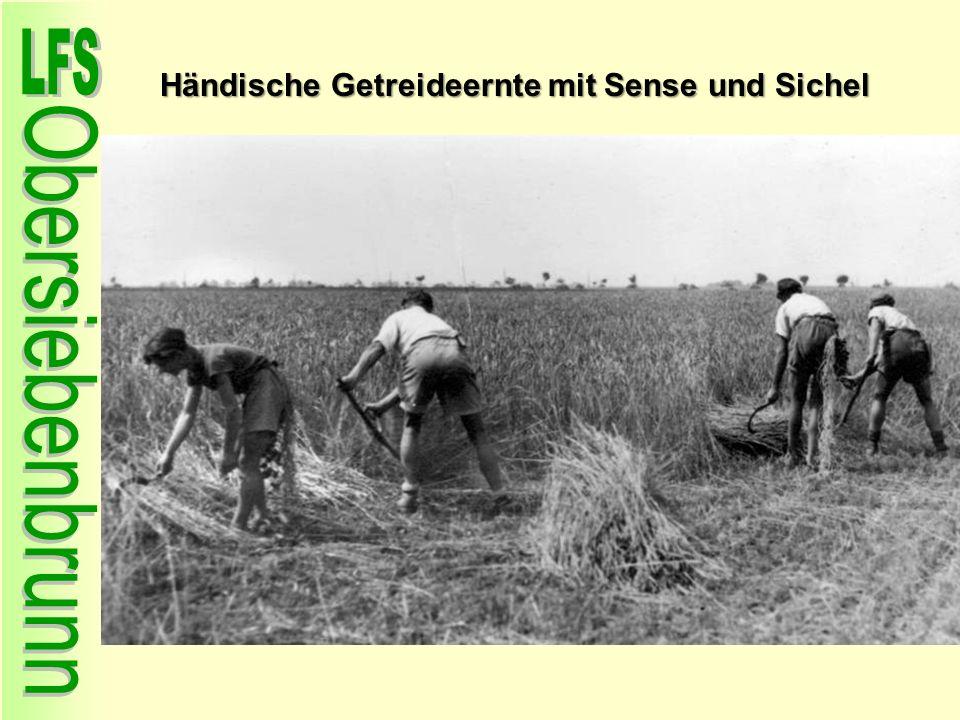 Händische Getreideernte mit Sense und Sichel