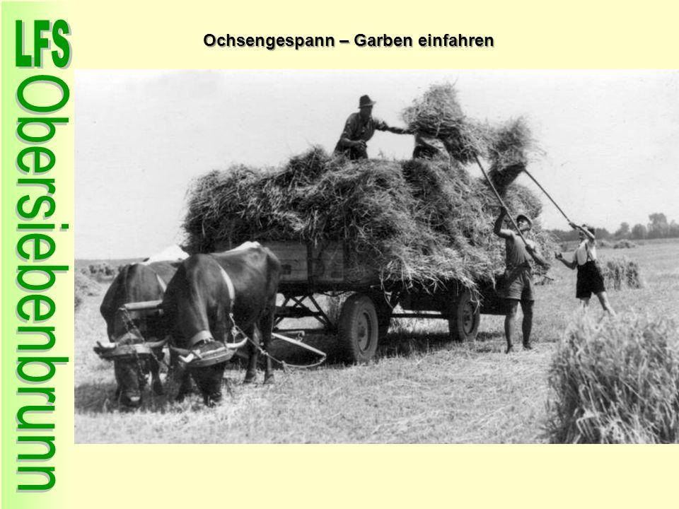 Ochsengespann – Garben einfahren