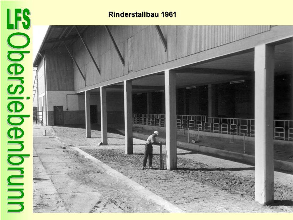 Rinderstallbau 1961