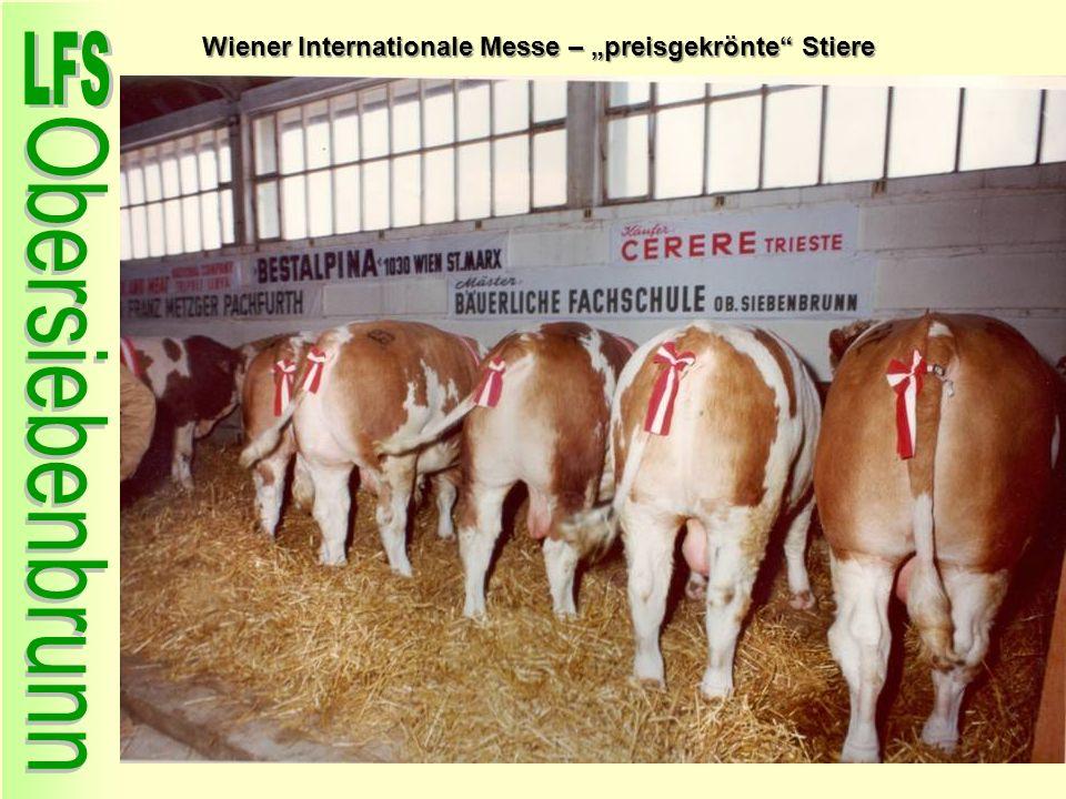 Wiener Internationale Messe – preisgekrönte Stiere