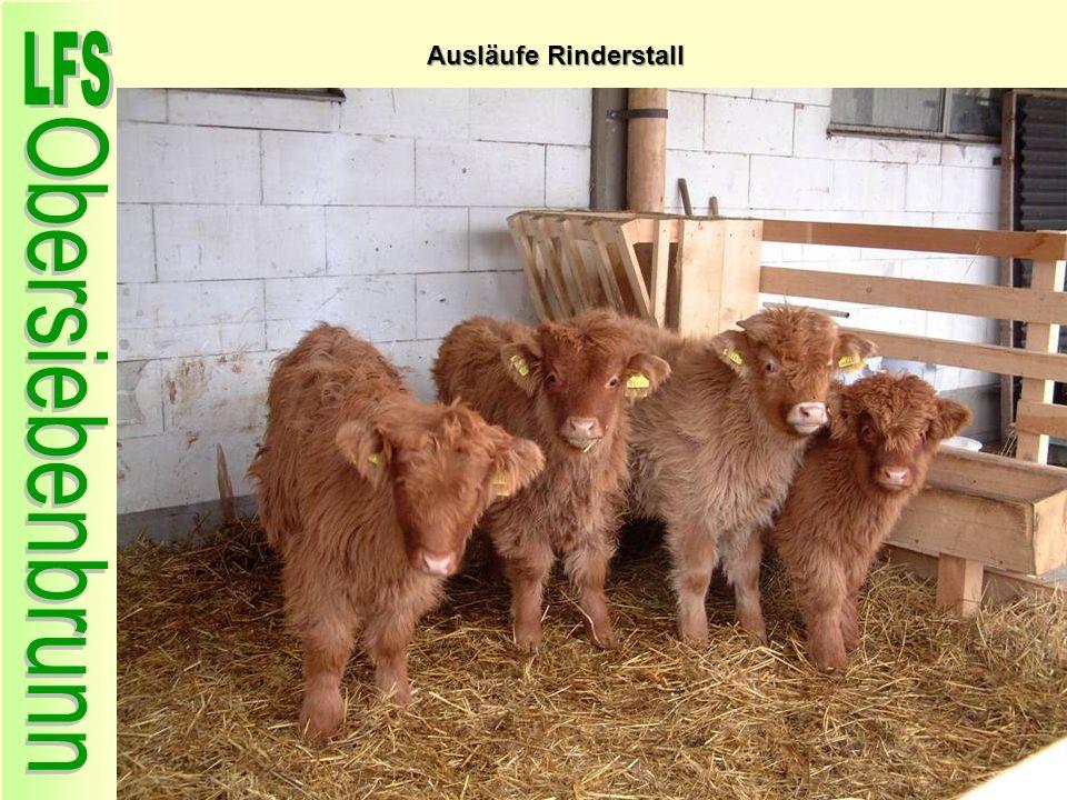 Ausläufe Rinderstall