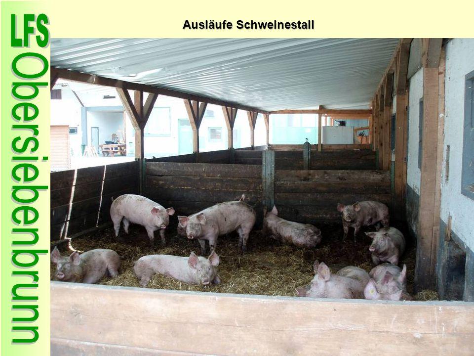 Ausläufe Schweinestall