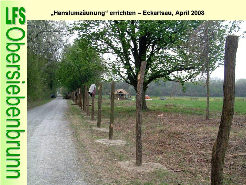 Hanslumzäunung errichten – Eckartsau, April 2003