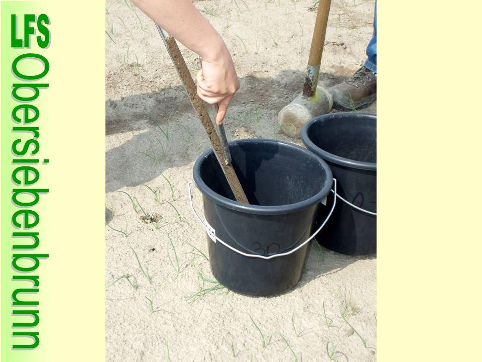 Anbau Körnererbsen Sortenversuch