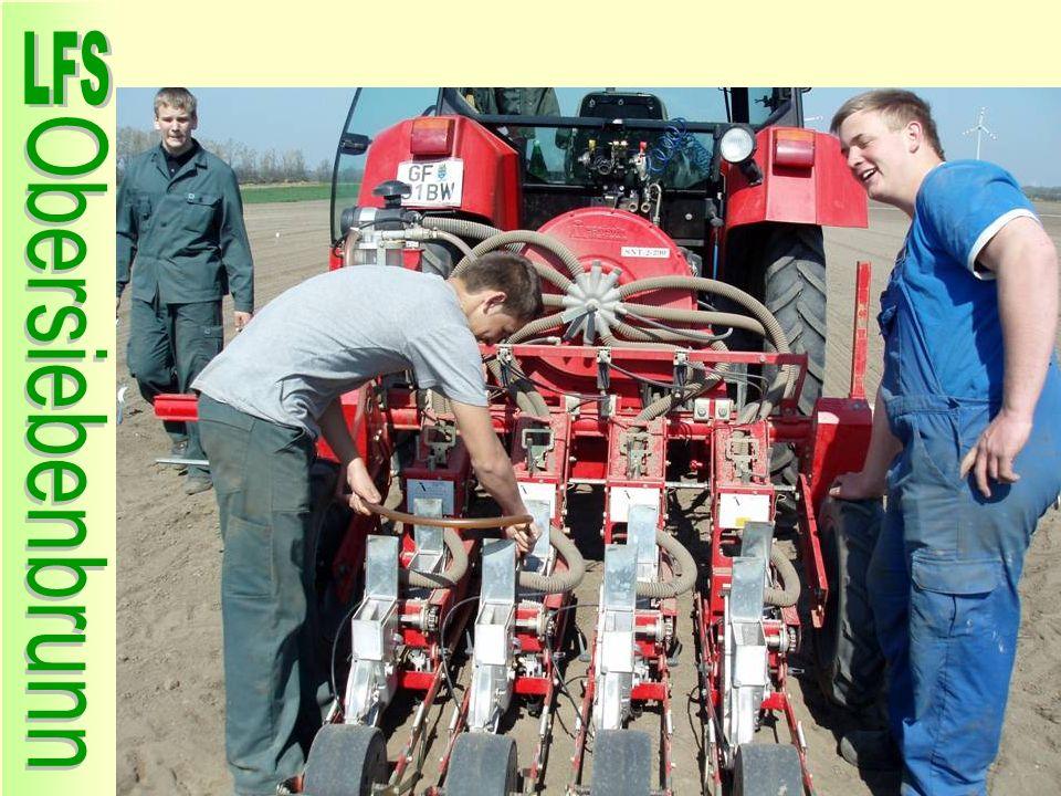 Anlage Karotten Sortenversuch für Karotingehaltbestimmung