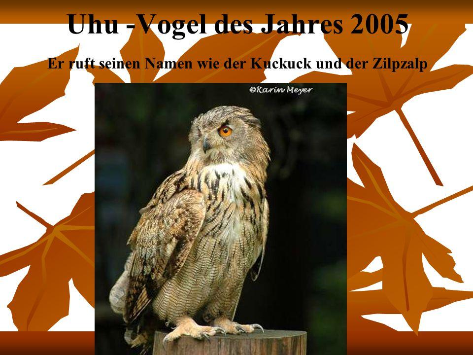 Uhu -Vogel des Jahres 2005 Er ruft seinen Namen wie der Kuckuck und der Zilpzalp