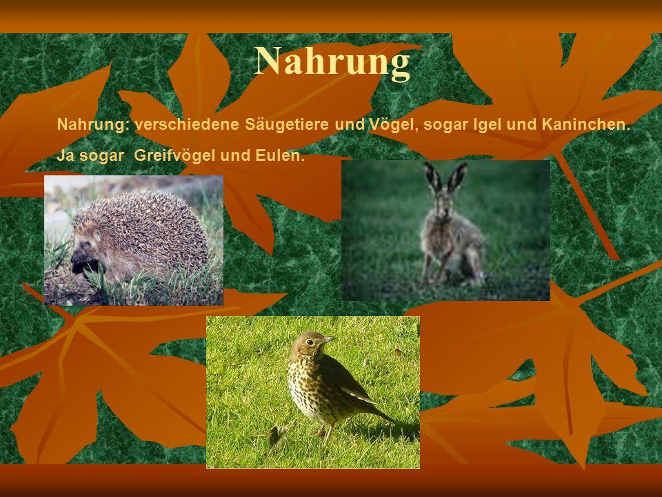 Nahrung Nahrung: verschiedene Säugetiere und Vögel, sogar Igel und Kaninchen.