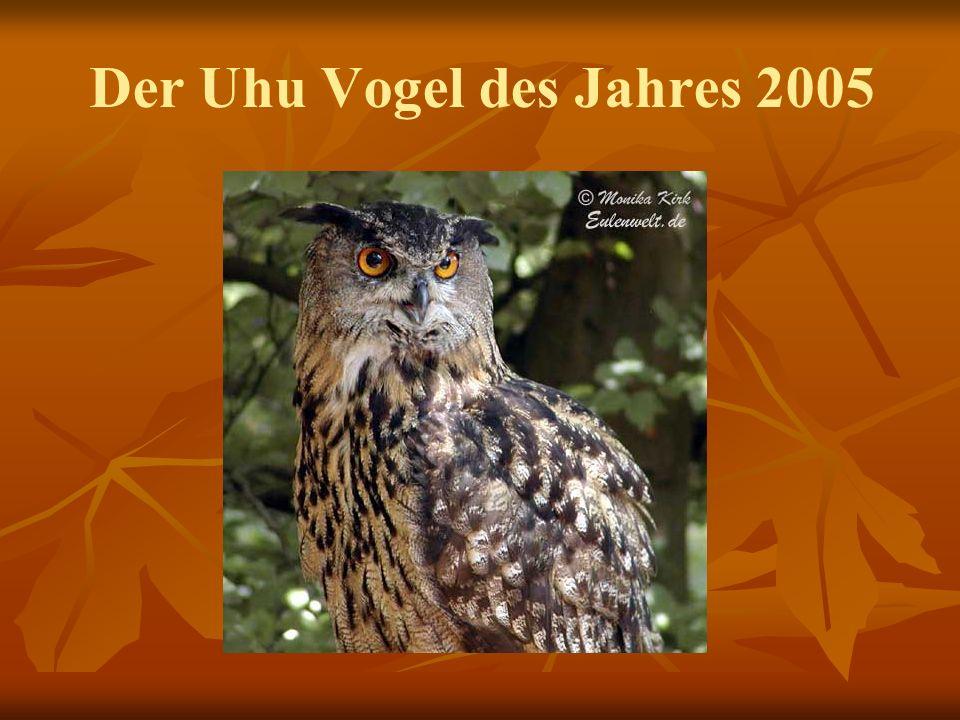 Der Uhu Vogel des Jahres 2005