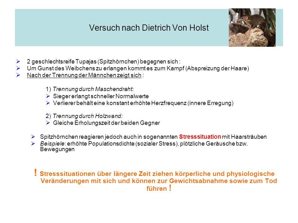 Versuch nach Dietrich Von Holst 2 geschlechtsreife Tupajas (Spitzhörnchen) begegnen sich : Um Gunst des Weibchens zu erlangen kommt es zum Kampf (Absp