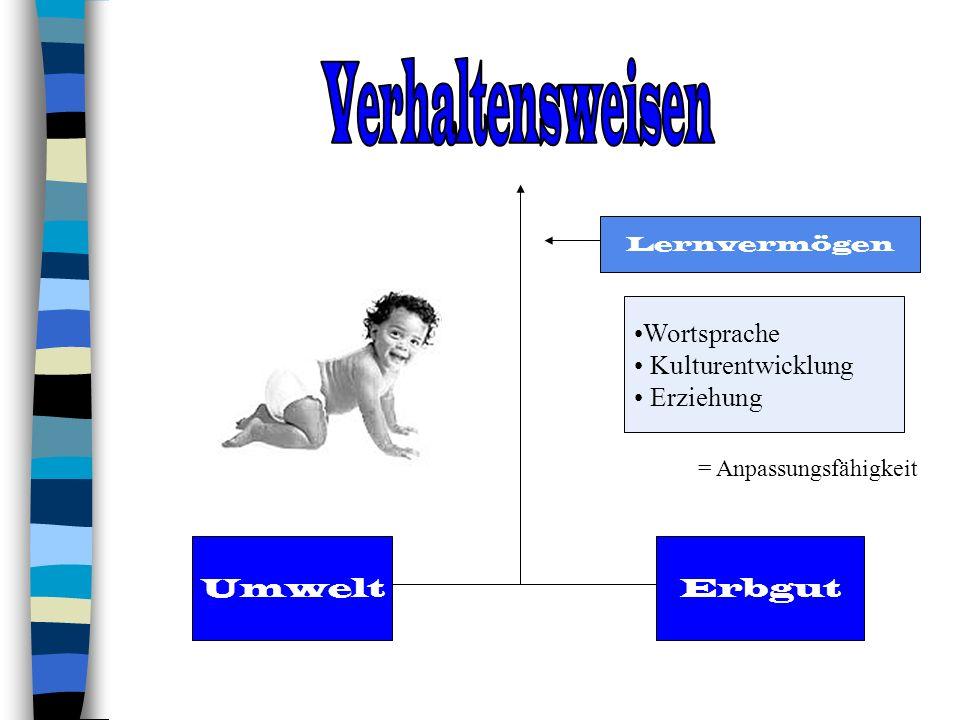 Lernvermögen ErbgutUmwelt Wortsprache Kulturentwicklung Erziehung = Anpassungsfähigkeit