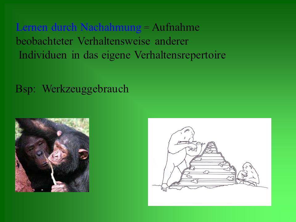 Nachteile der Nachahmung für Tiere: in Menschenobhut aufgezogene Tiere müssen bei Auswilderung neues Verhaltensrepertoire erlernen Versuch und Irrtum Lernen durch Nachahmen