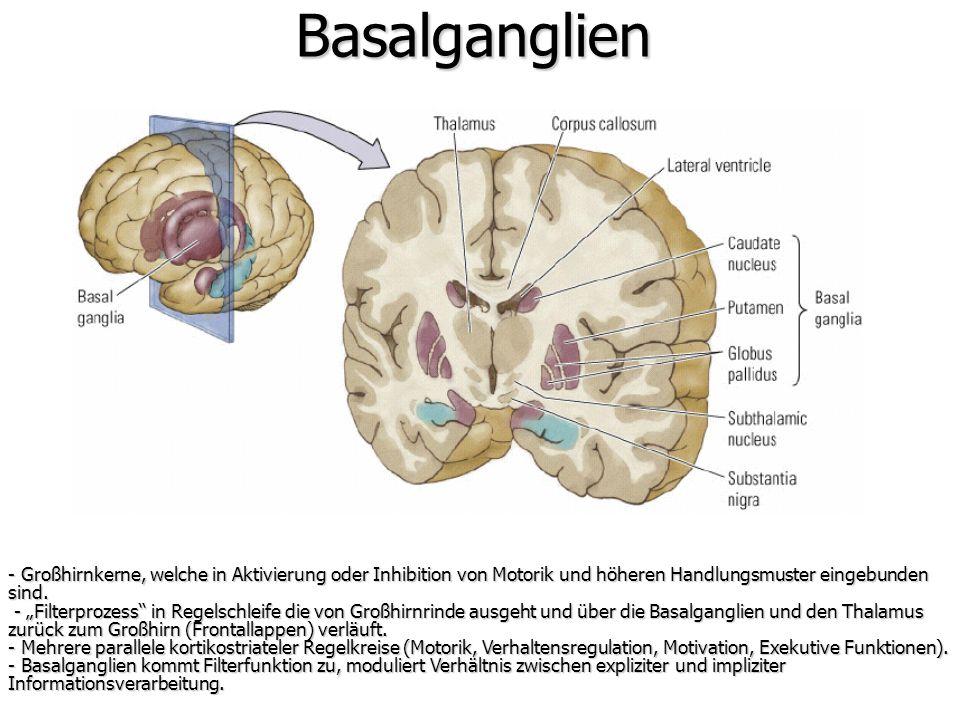 Basalganglien - Großhirnkerne, welche in Aktivierung oder Inhibition von Motorik und höheren Handlungsmuster eingebunden sind. - Filterprozess in Rege