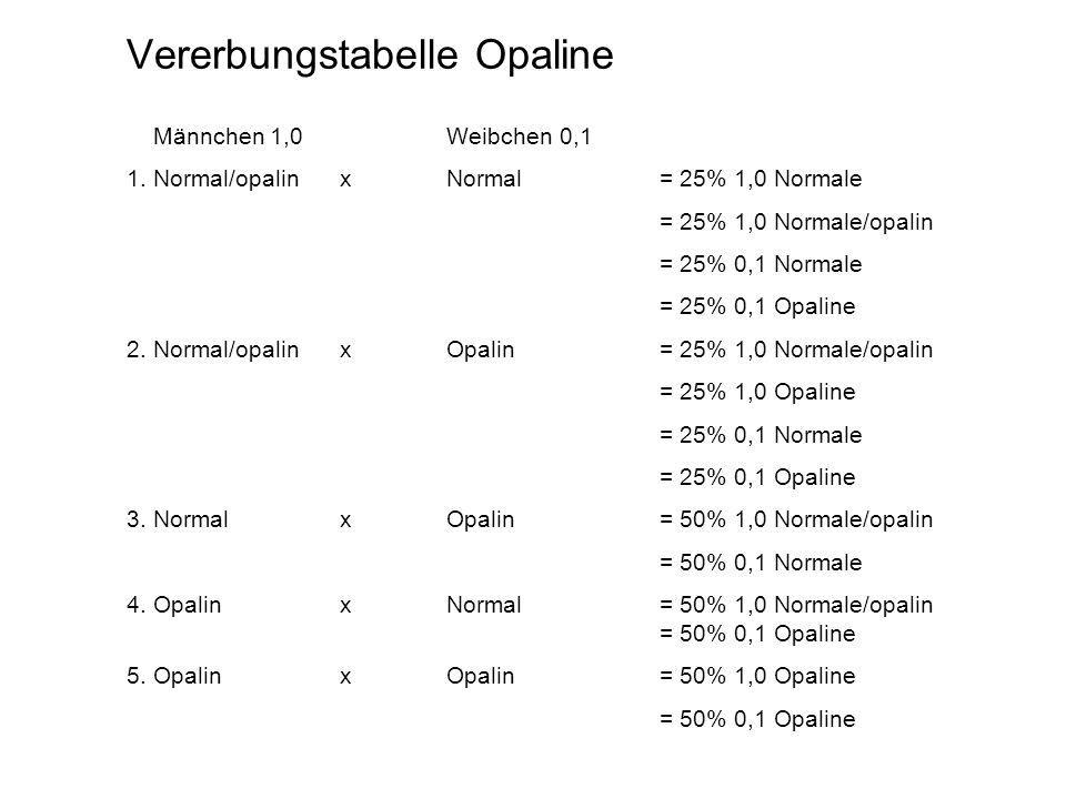 Vererbungstabelle Opaline Männchen 1,0Weibchen 0,1 1. Normal/opalin xNormal = 25% 1,0 Normale = 25% 1,0 Normale/opalin = 25% 0,1 Normale = 25% 0,1 Opa