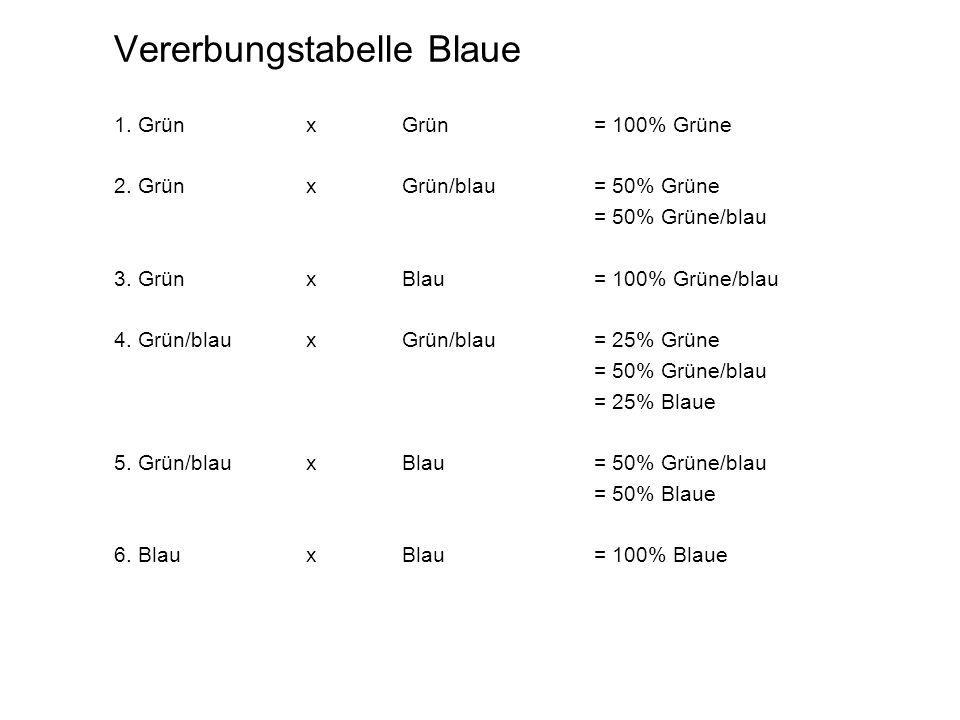 Vererbungstabelle Blaue 1. Grün xGrün= 100% Grüne 2. GrünxGrün/blau= 50% Grüne = 50% Grüne/blau 3. GrünxBlau= 100% Grüne/blau 4. Grün/blauxGrün/blau=
